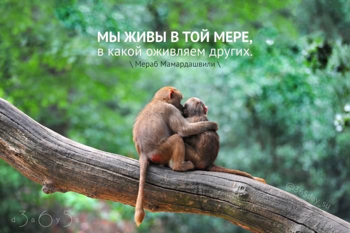 Цитата о жизни